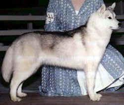 Debalys Carlotta - Best in Breed Puppy